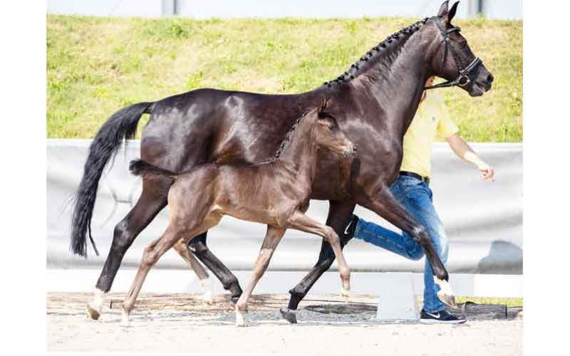 Fürst Toto daughter sold to France