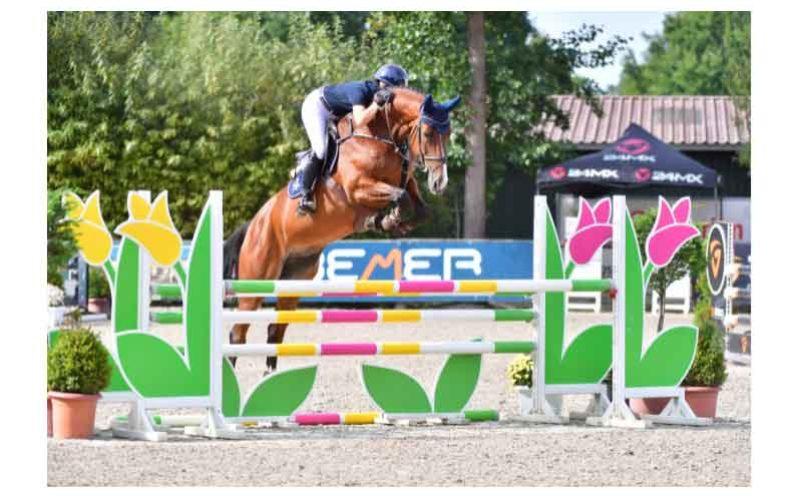 Leilão Online PS – 10 promissores cavalos de saltos (VÍDEO)