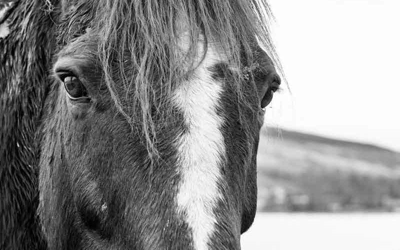 Animalistas radicais atacam o desporto equestre