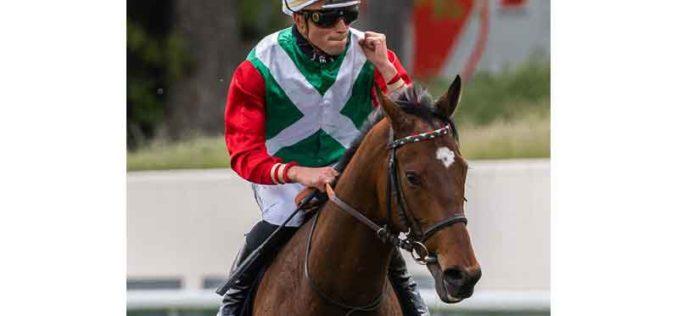 Ricardo Sousa inscrito em 4 corridas em La Zarzuela