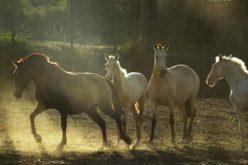 Aljustrel recebeu sessão sobre saúde e bem-estar do cavalo